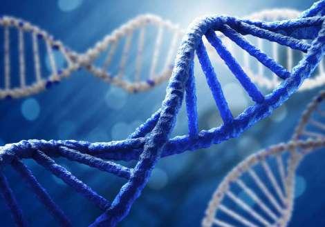 Ricerca, il segreto della lunga vita è custodito in un gene