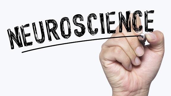 neuroscienze principi